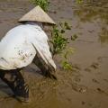 La chaleur combinée aux mouvements de la marée ne permettent pas aux planteurs de travailler plus de 3 heures.