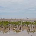 """À marée basse devant le village de DA LOC. Monsieur NGHI: """"Le programme mangrove a permis de réduire la vulnérabilité de la communauté, c'est aussi une opportunité pour sensibiliser ses habitants à la protection de l'environnement, et à l'adaptation aux risques naturels..."""""""