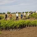 Les femmes de la communauté préparent un nouveau chargement de plants de mangrove, qui sera transporté de la pépinière jusqu'au lieu de plantation.